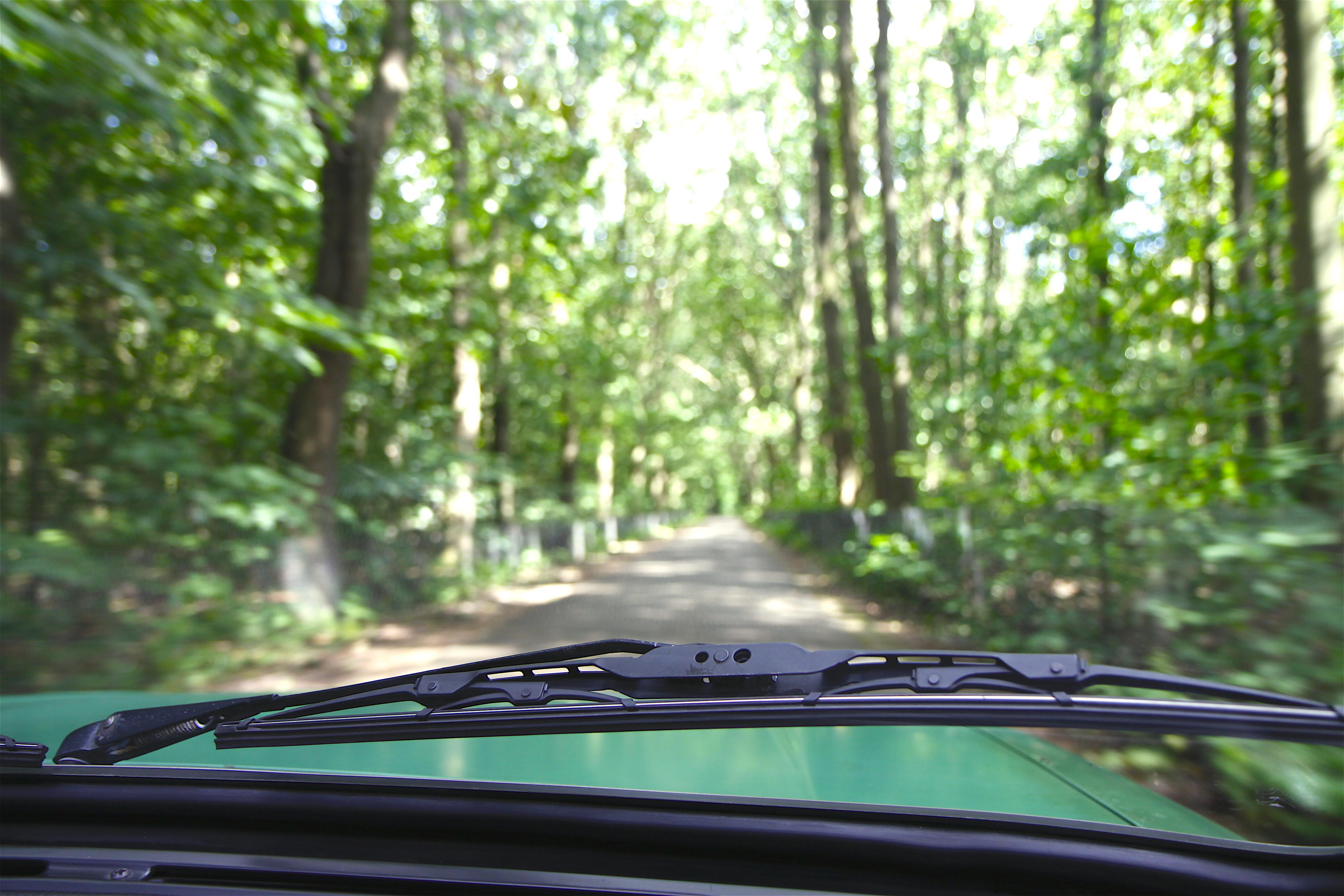 Tussen de bomen door