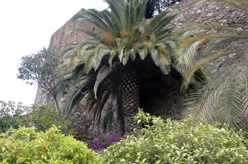 Grote palmen in het Alcazaba.