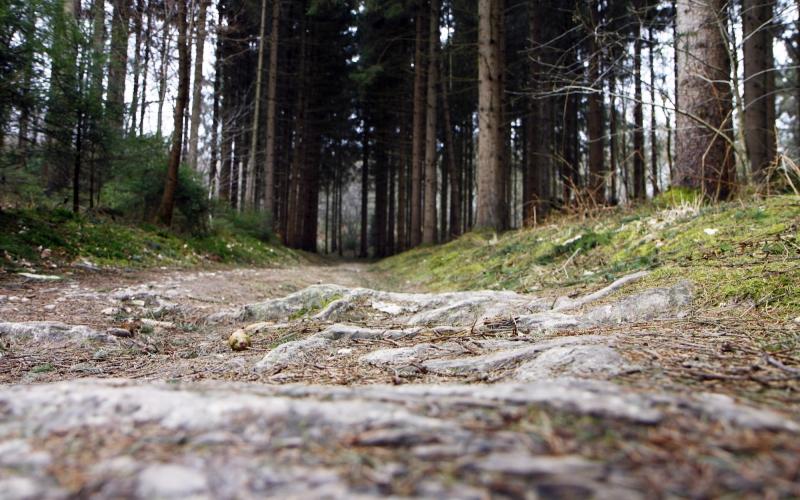 Het bos wordt steeds dichter begroeid.