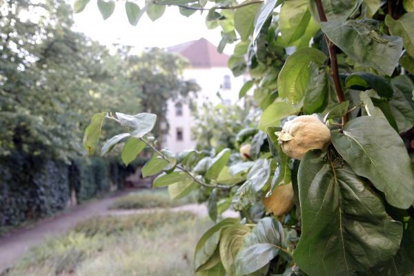 Groene binnenhofjes in Neustadt.