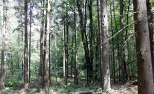 Tussen de bomen...