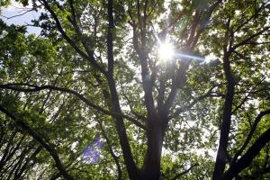 De zon piept tussen de bladeren.