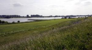 De uiterwaarden van de Rijn.
