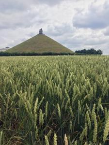 De heuvel van de Gouden Leeuw