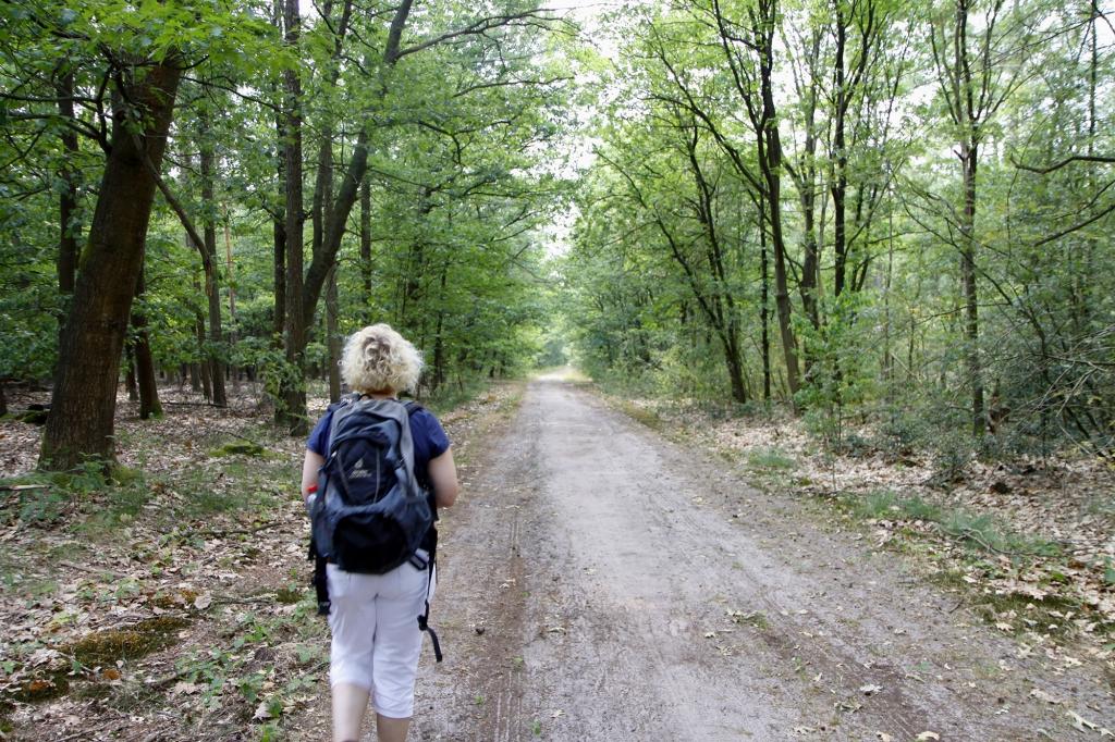 Door het bos.