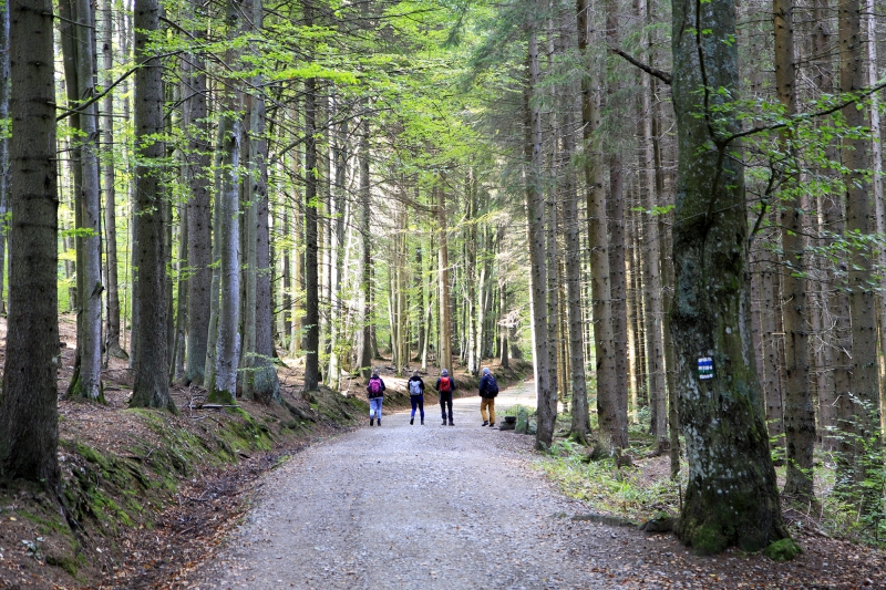 Door het Tsjechische bos
