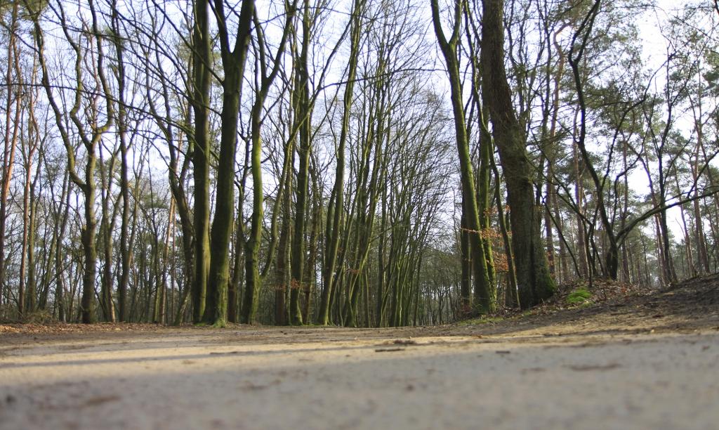 Door de bossen.