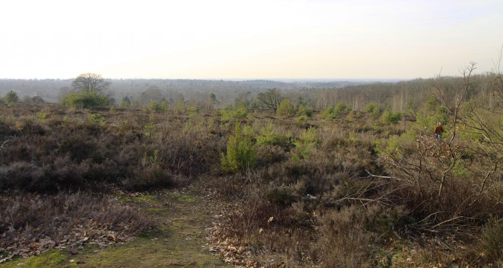 Uitzichtpunt Haarlerberg.