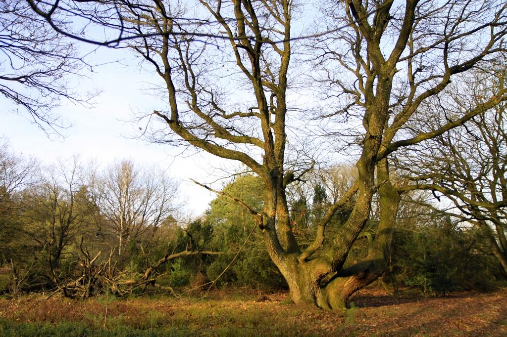 Bomen en lagere struiken wisselen elkaar af.