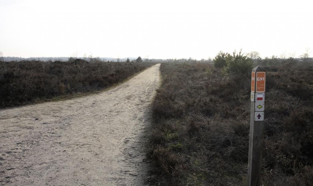 Een recht pad door de Sallandse Heuvelrug.