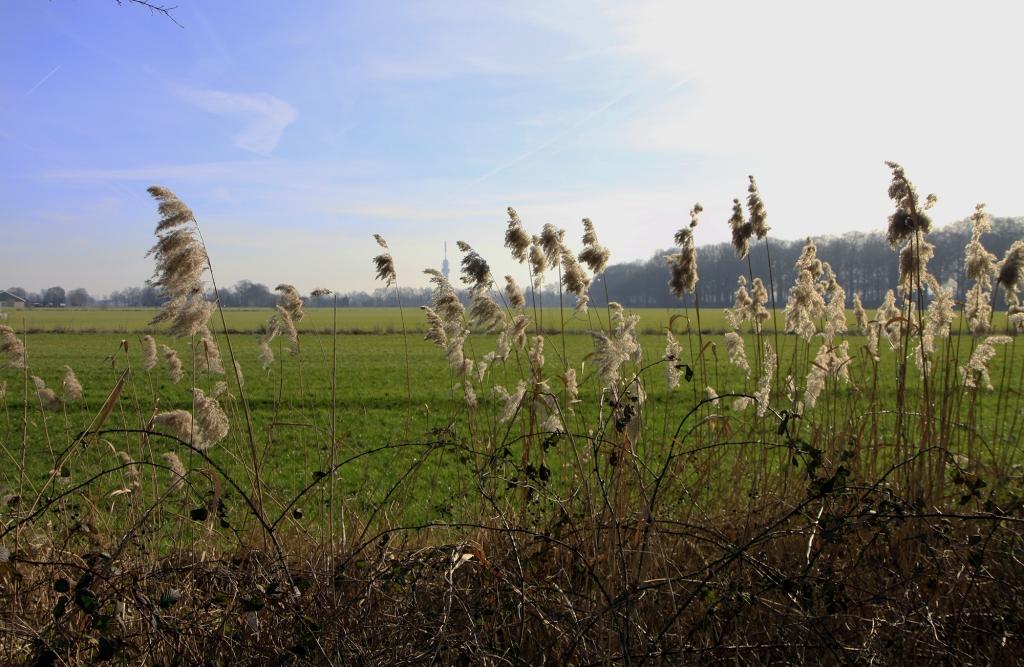 Grasvelden zo ver je kunt kijken