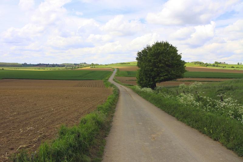 Uitgestrekte landschappen in het Vlaamse Heuvelland