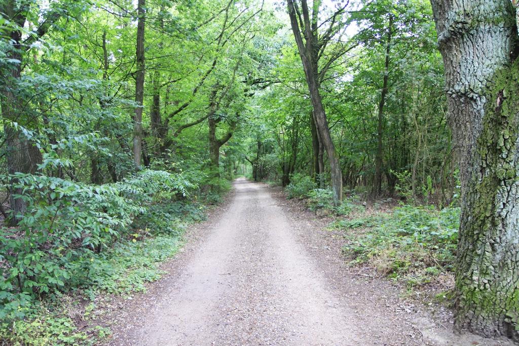Veel bos