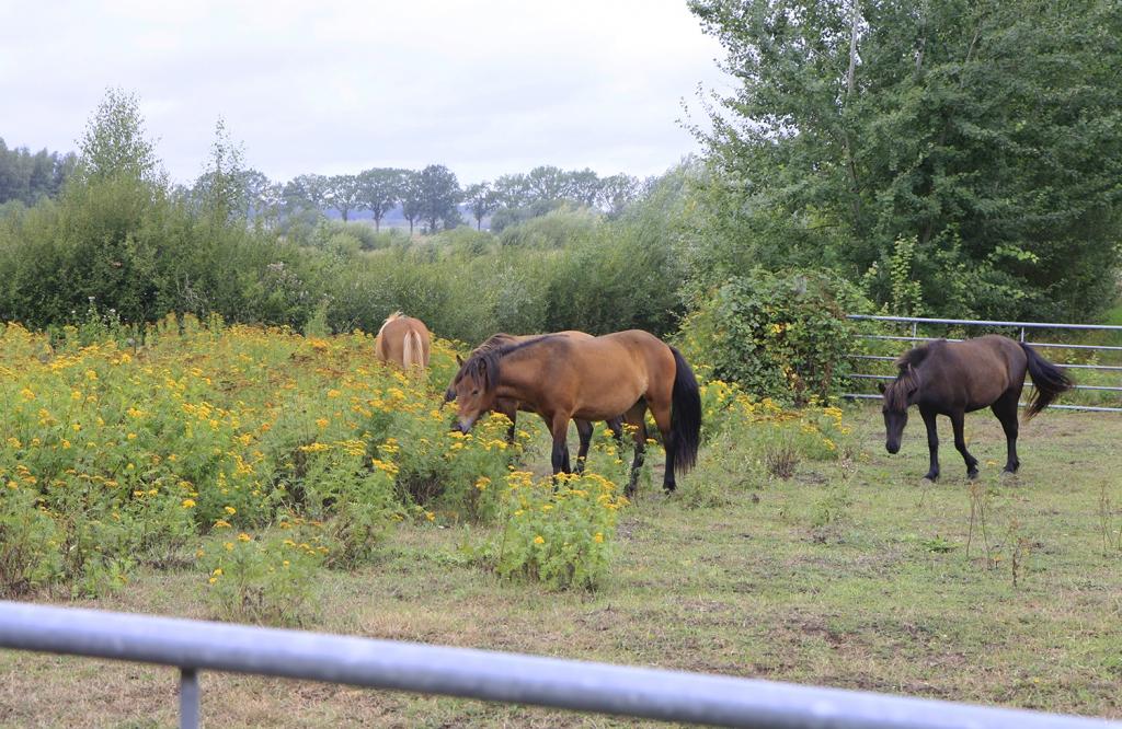 De paarden in het wild
