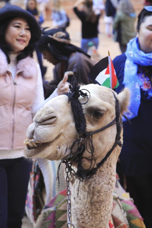 Kamelen met een vlaggetje op hun kop