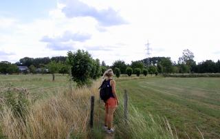 Pieterpad etappe 23: Van Romeins geld tot hupsende herten in Midden-Limburg