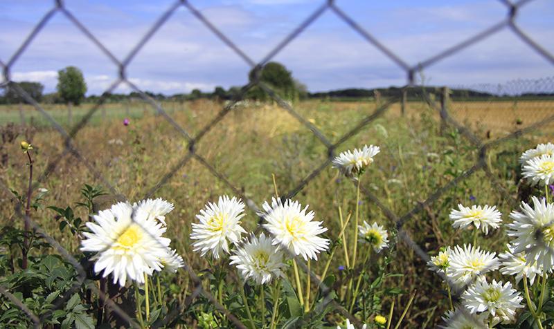 Bloemetjes in het veld