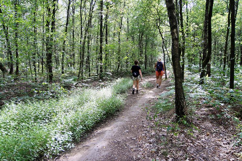 Bos vlak voor Montfort
