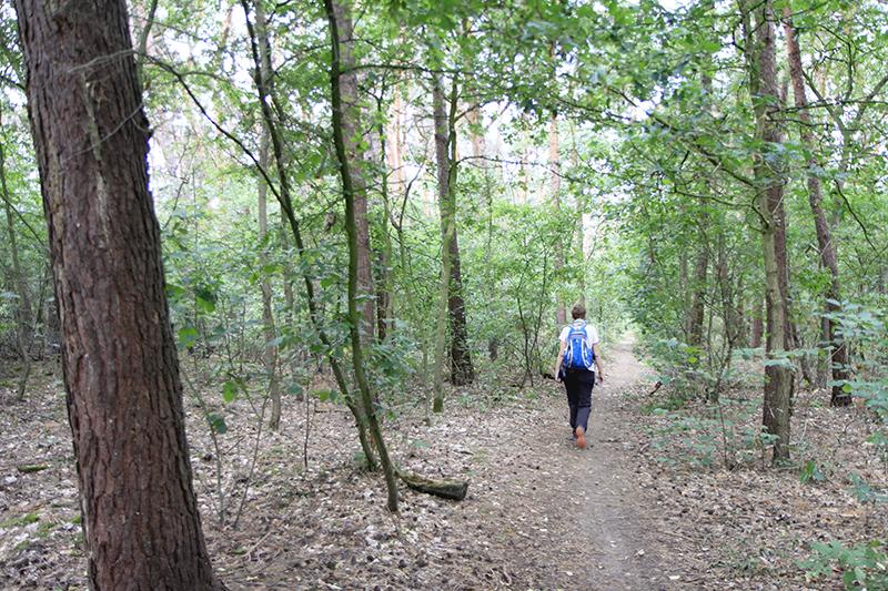 Door het bos bij Pey