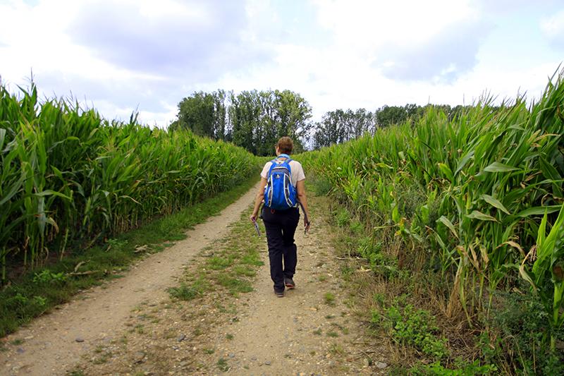 Tussen het mais door