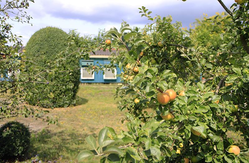 Fruit langs de weg
