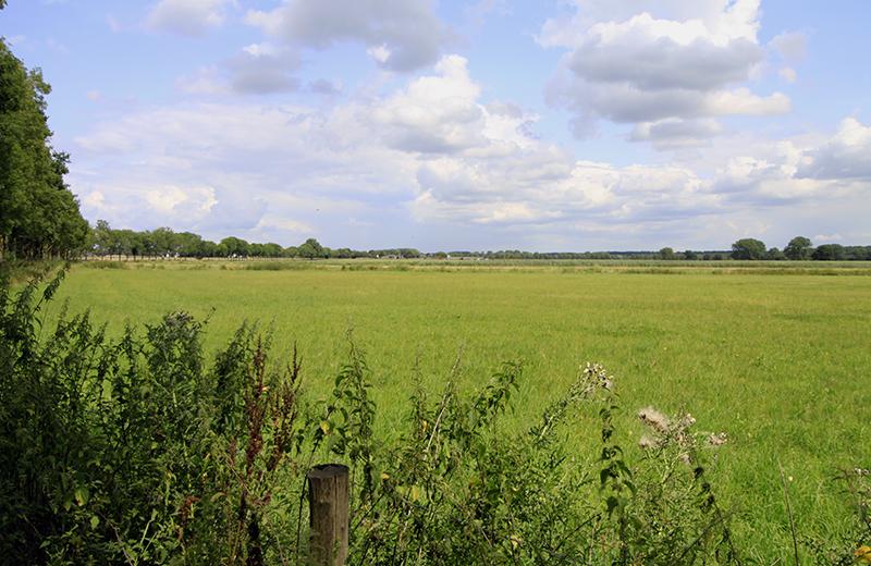 Groene velden voorbij Echt