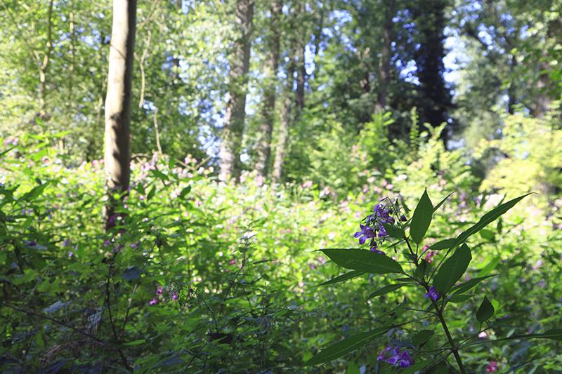 Midden in de natuur bij Valkenburg