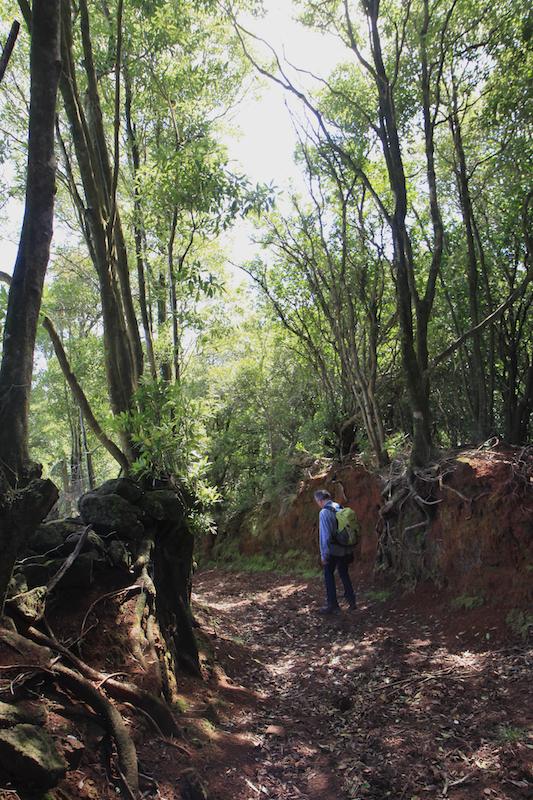 Door de modder in het bos