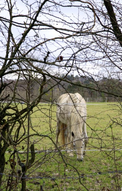 Paard langs de route