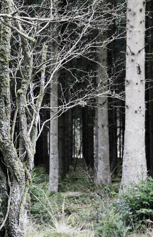 Griezelen in een donker bos