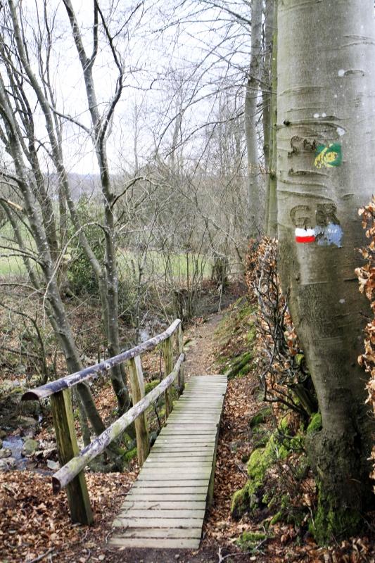 Door het bos in de Eifel