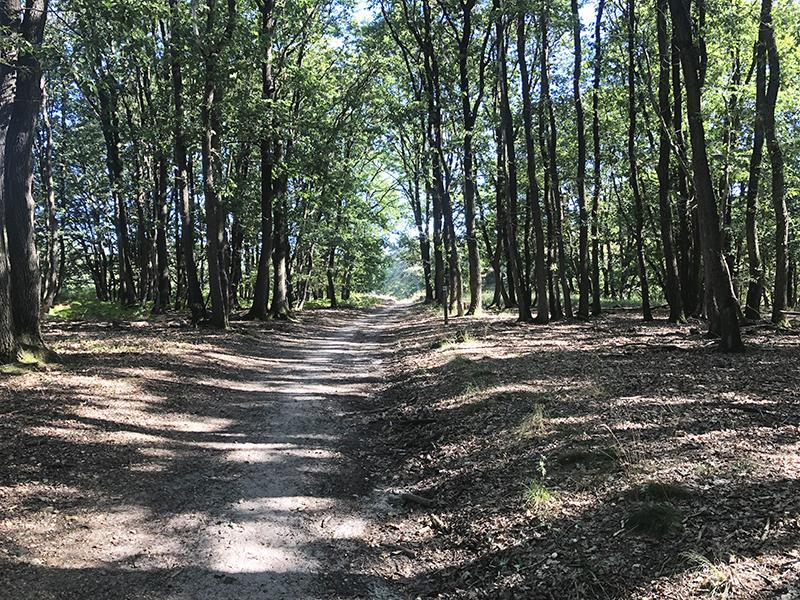 De bossen van de Meinweg