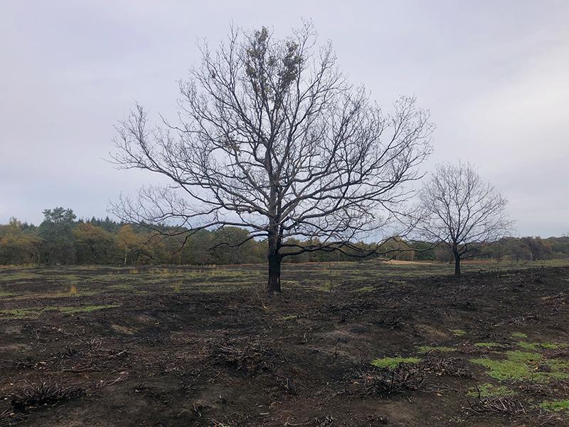 De schade van de brand is nog goed zichtbaar