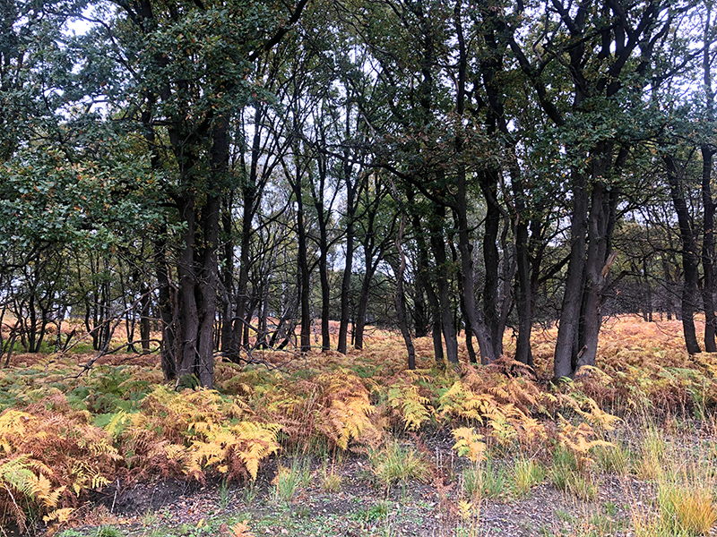 Varens in het bos