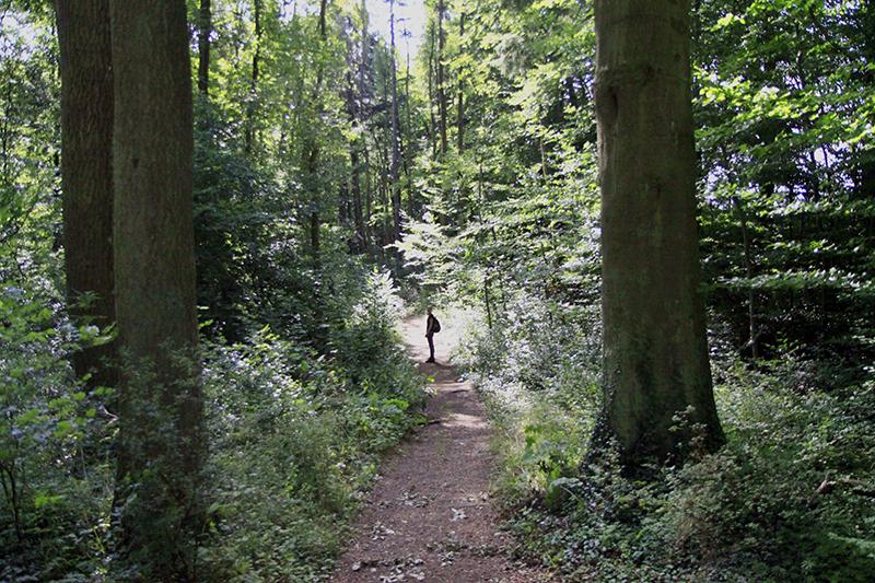 De bossen bij het klooster